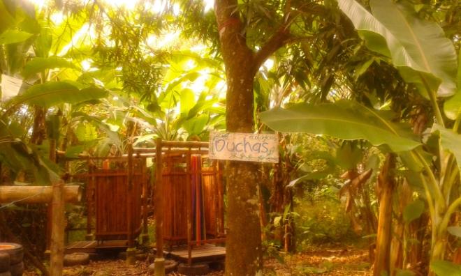 Permacultura, purificacion agua