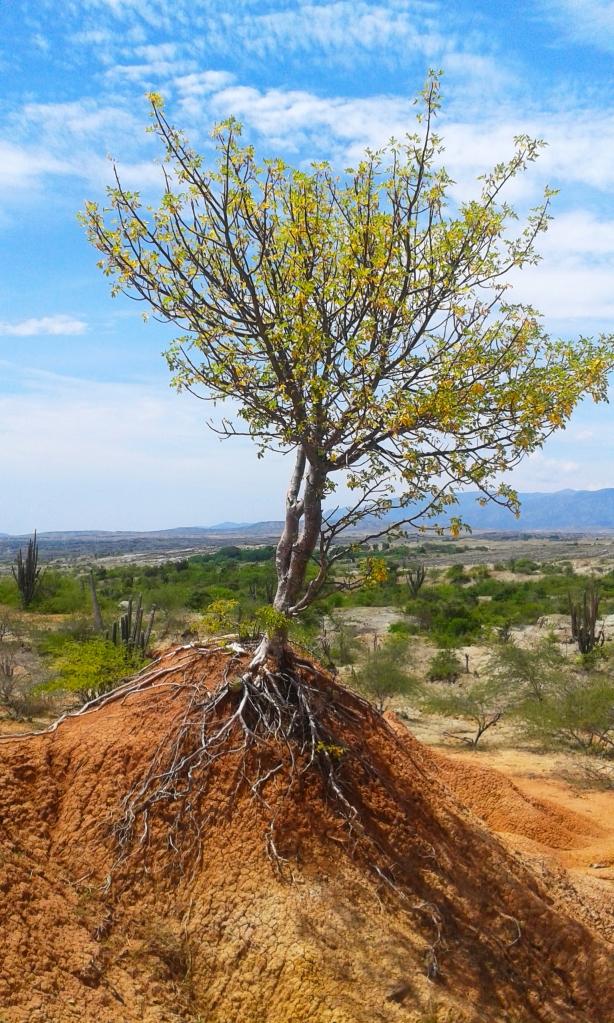 el-desierto-del-tatacoa