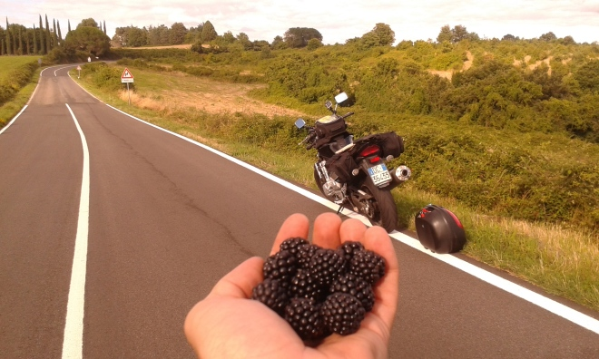 frutas recogida en el camino