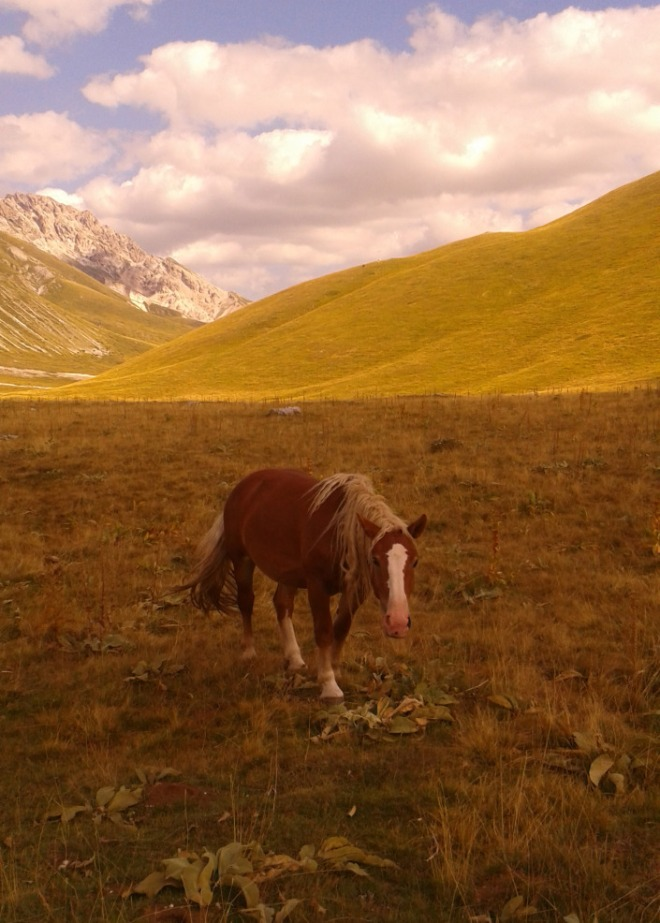 cavalli in campo imperatore