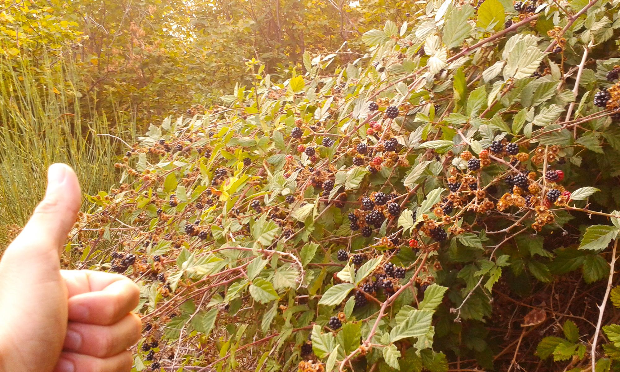 8 ecologia permacultura sustenibilidad
